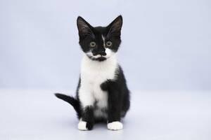 Отдам в хорошие руки котенка мальчика Джано .