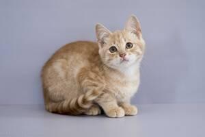 Отдам в хорошие руки котенка мальчика Мирослава .