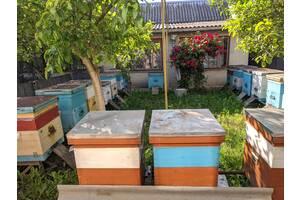 Продам бджоли .
