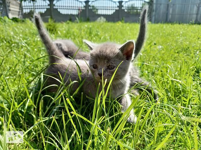 продам Продам кошенята бу в Дрогобичі