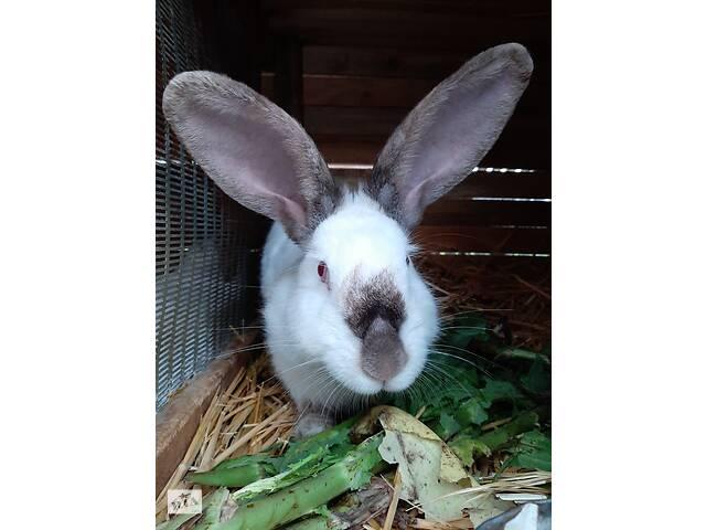 бу Продам кролів  в Ракитном