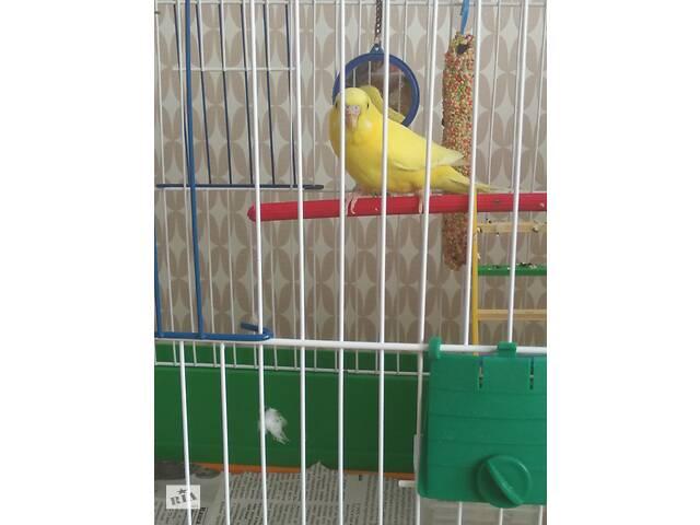 продам Продам попугая с клеткой бу в Киеве