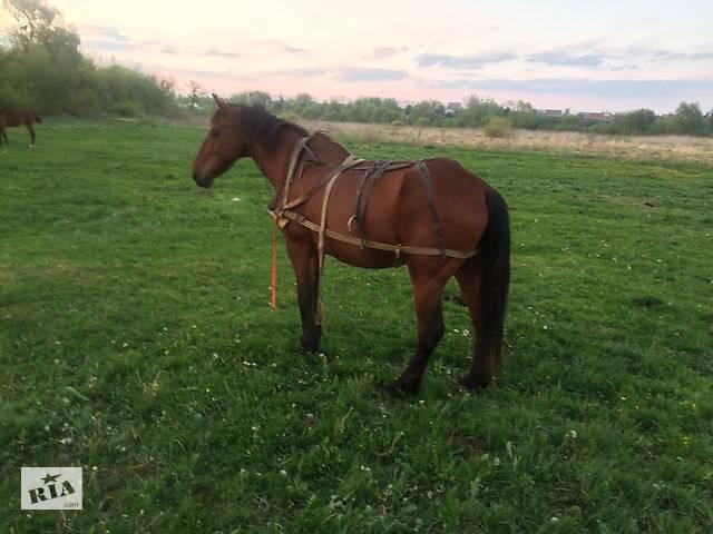 продам Продам робочого коня бу в Калиновке