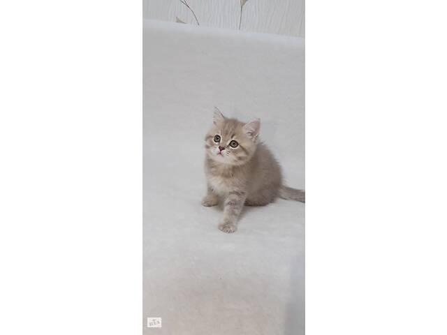 продам Продажа котят бу в Кривом Роге