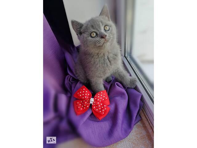 бу Шотландский котенок, девочка в Харькове