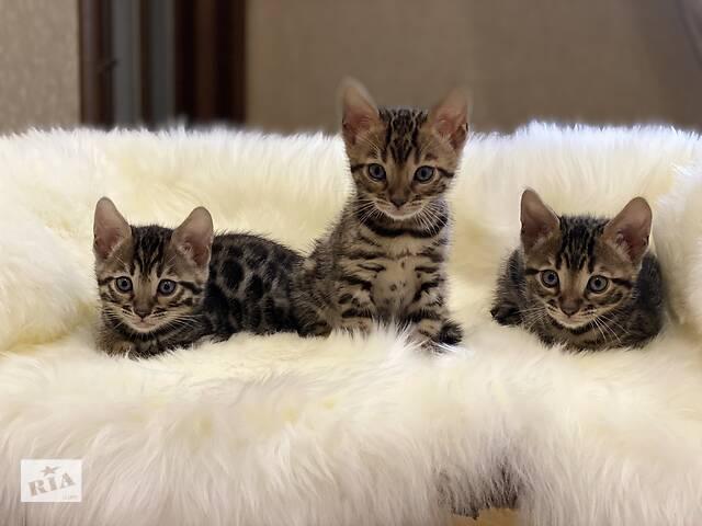купить бу Ці кошенята вкрадуть Ваші серця в Львове