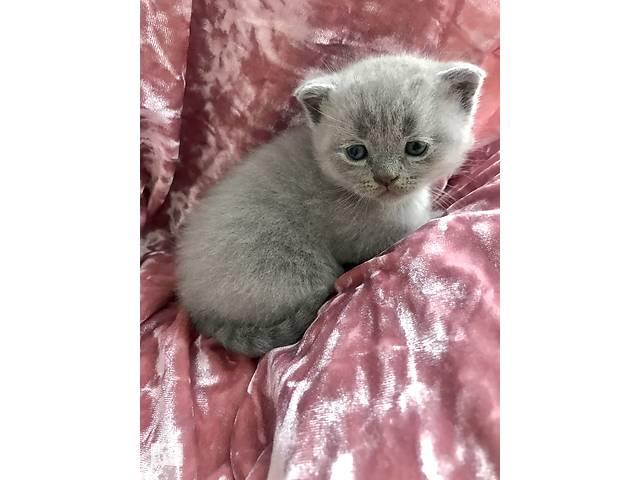 купить бу Висловухе кошеня в Сокале