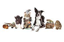 Послуги для тварин