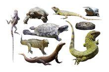 Рептилии и Экзотические животные
