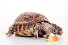 Корм и лакомства для рептилий