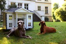 Собаки для частного дома