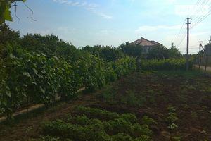 Куплю землю сельскохозяйственного назначения на Таирово без посредников